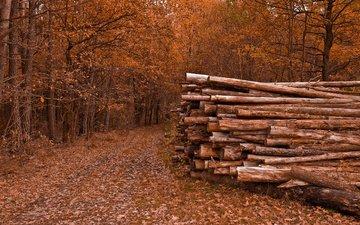 деревья, природа, листья, дорожка, осень, бревна