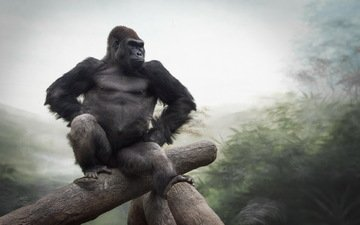 природа, обезьяна, горилла, примат