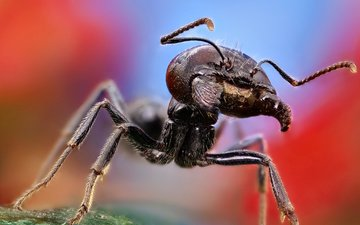 macro, mustache, insects, ant, antennae, jaw, legs