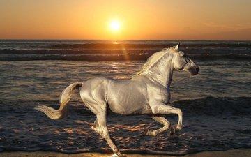 лошадь, вода, солнце, природа, закат, море, животные, песок, пляж, рассвет, волна, океан, конь, скачет, жеребец