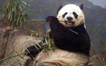 животные, панда, медведь, кушает