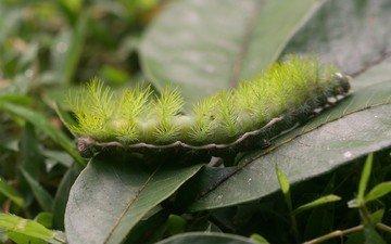 трава, листья, макро, насекомые, зеленая, гусеница, пушистая, мохнатая