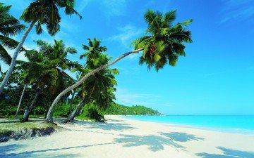 пляж, тропики