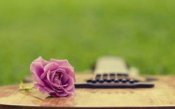трава, гитара, лето, роза, полянка