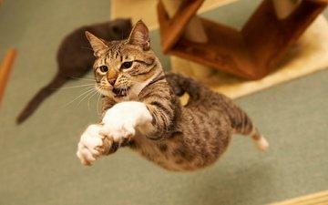 фон, полет, кот, кошка, прыжок, полосатый