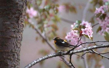 цветы, дерево, цветение, ветки, ветви, птица, весна, птичка