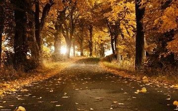 свет, дорога, деревья, солнце, листья, парк, ветви, осень, путь, асфальт