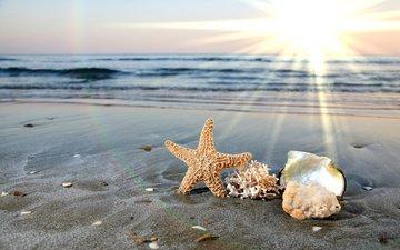 вода, солнце, берег, волны, лучи, море, песок, пляж, океан, ракушки, морская звезда