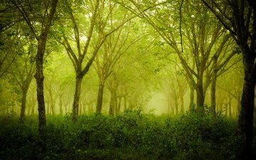 трава, деревья, природа, лес, кусты, лето