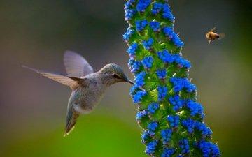 полет, цветок, крылья, птица, пчела, колибри