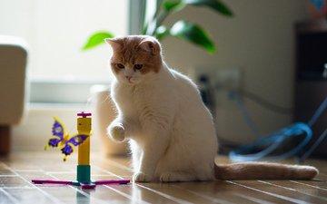 кошка, бабочка, игрушка, комната, пол, обои c ben torode, бенджамин тород, ханна