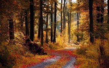 дорога, деревья, природа, лес, листва, осень, бревна
