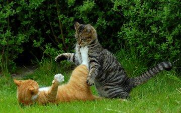 трава, природа, кусты, коты, кошки, драка котов