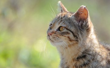 морда, солнце, зелень, фокус камеры, кот, кошка