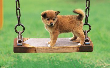 background, dog, puppy, swing, chain, cute
