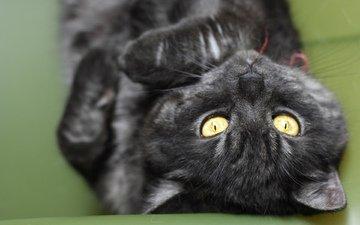кот, кошка, черный, лежит, полосатый