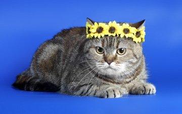 фон, кот, кошка, серый, венок, полосатый, король кот