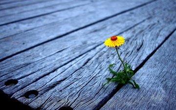 cvetok, doski, zhyoltyj, derevyannye, nastil