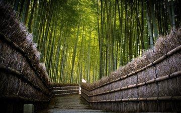 дорога, спуск, япония, ограждение, ступени, бамбуковый лес