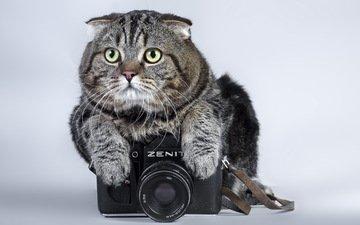 кот, кошка, фотоаппарат, зенит, камера, полосатый