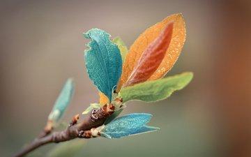 ветка, природа, листья, макро, красочные, цветные, литья