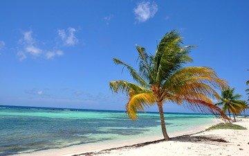 beach, tropics, the maldives