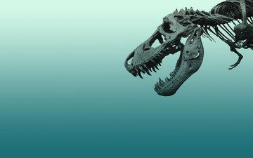 минимал, sinij, skelet, dinozavr, kosti