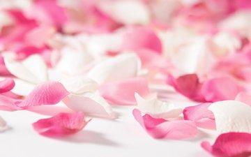 cvety, roza, nastroeniya, леспестки