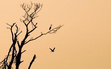 fon, derevo, minimalizm, pticy