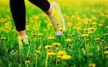 trava, leto, oduvanchiki, nogi, kedy