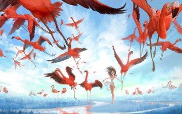 девушка, фламинго, voda