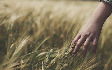 полюс, trava, k, koloski, nastroenie, ruka, pshenica, ruki