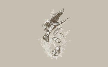 polet, uzor, perya, cherep, ptica