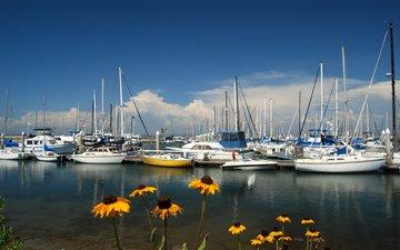цветы, море, яхты