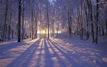 the sun, forest, winter