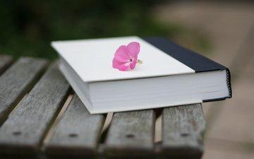 цветок, скамья, книга, размытие, cvetok, krasivo, kniga