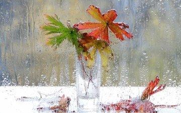 cvety, kapli, natyurmort, vaza, dozhd, okno