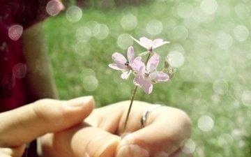 cvetok, nezhnost, ruki