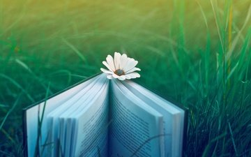 trava, cvetok, priroda, nastroenie, kniga