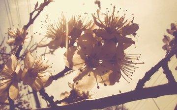 cvety, vesna, zapax