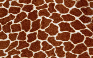 текстура, фон, жираф, мех