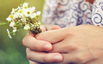 девушка, cvety, romashki, rasteniya, cvet, ruki, kofta