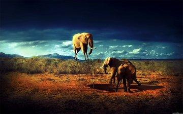 pustynya, zhivotnye, slon, slony, afrika
