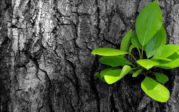 tree, leaves, macro, derevo, listya, rostok