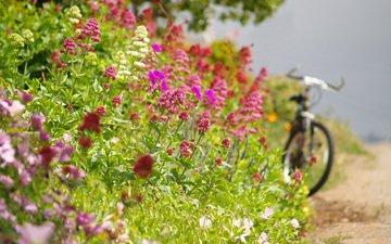 cvety, leto, doroga, velosiped, obochina