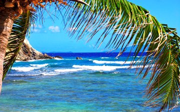 море, пальма, тропики