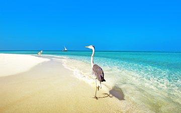 море, пляж, тропики, птички, мальдивы