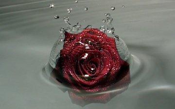 kapli, buton, rozy, voda