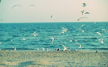 more, sand, chajki, pticy, krylya nebo
