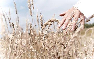 полюс, trava, nebo, svet, ruka, chelovek, palcy